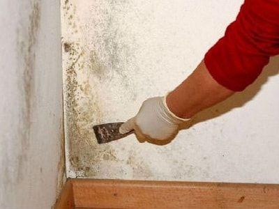 Грибок на стенах в квартире