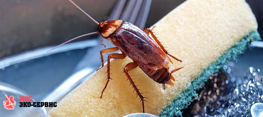 Причины появления насекомых в жилище