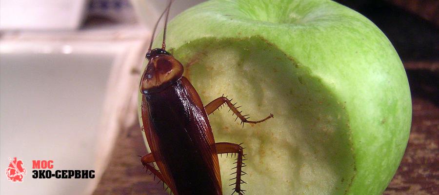 Профессиональные способы борьбы с тараканами