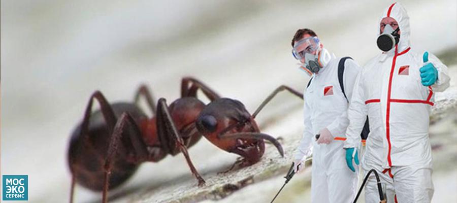Уничтожение муравьев
