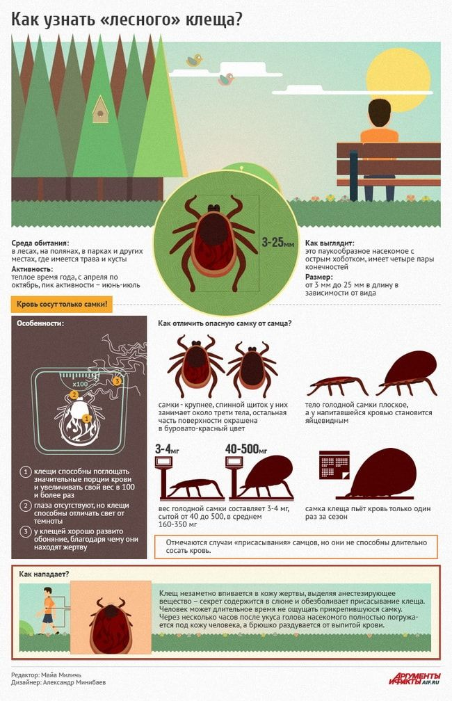 Как узнать лесного клеща