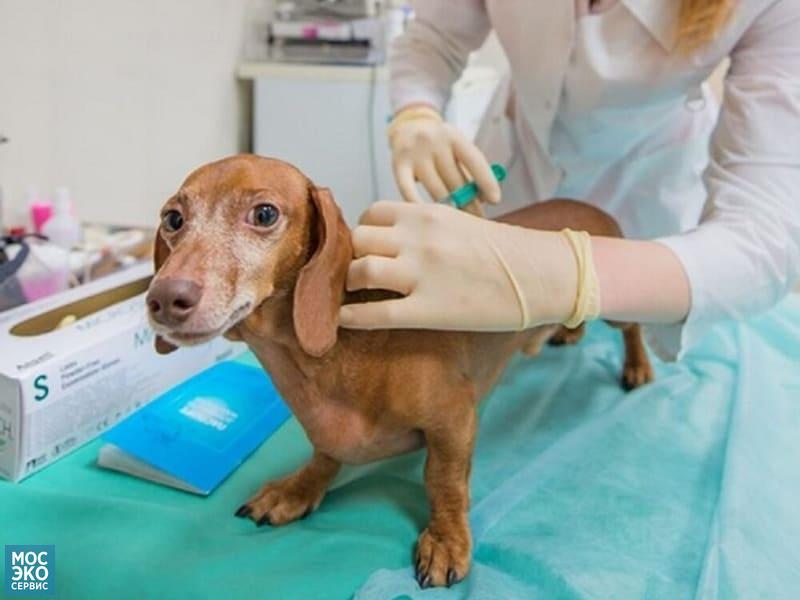 Прививка от клещей для собак