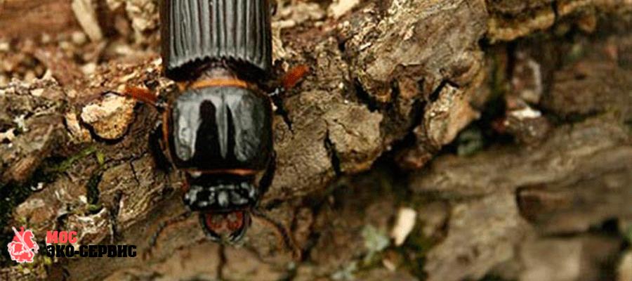 Как происходит обработка от жуков