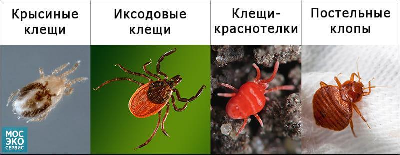 Внешний вид вышеописанных насекомых