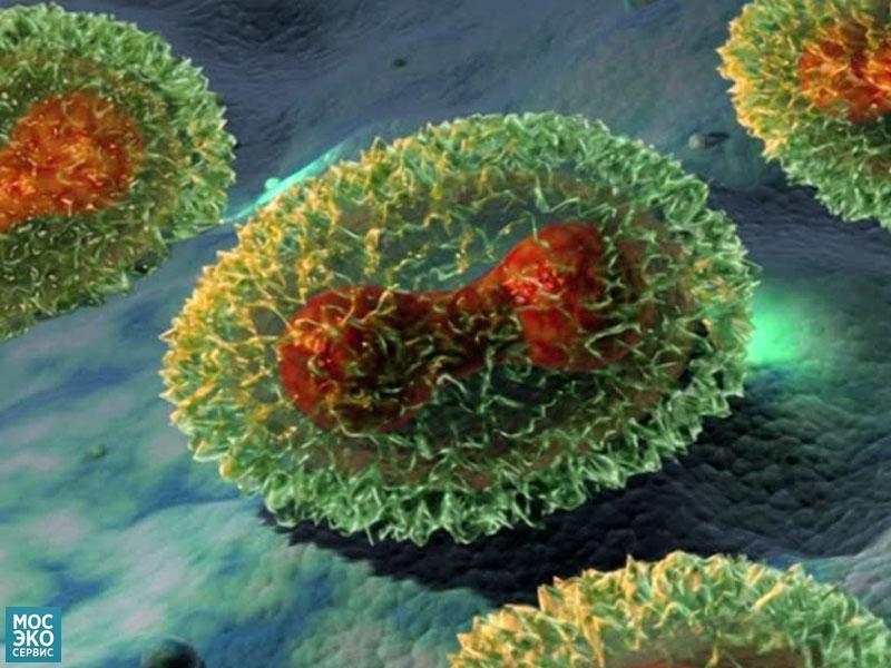 Вирус оспы
