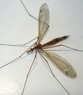 Где живут комары