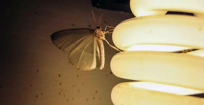 Лампочки насекомые