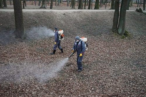 С начала апреля во многих городах начали проводить противоклещевую обработку парков и зон отдыха