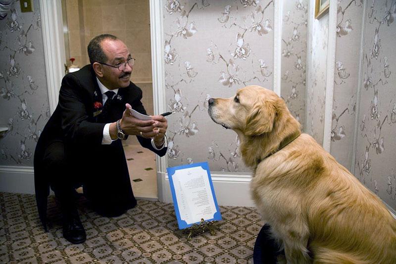 Сотрудники австрийских отелей ищут клопов с помощью собак