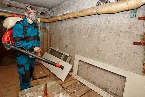 Специалист обрабатывает подвал от блох
