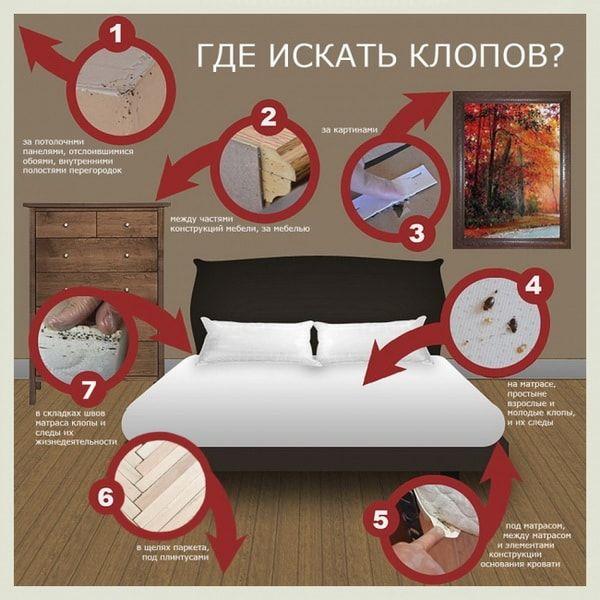 схема где искать постельного клопа