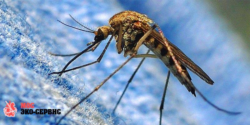 Насекомые переносят коронавирус?