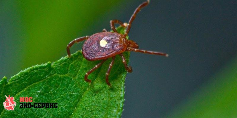 Коронавирусные насекомые: правда или миф