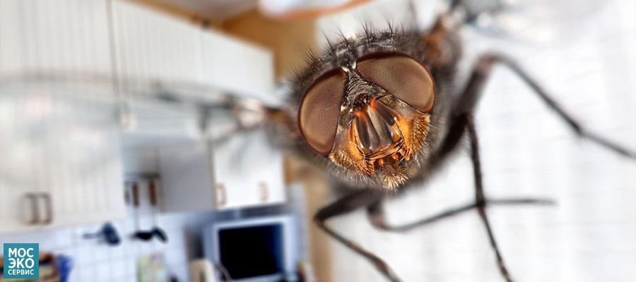 Какие мухи живут в доме