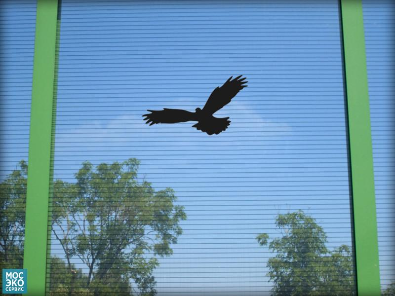 Наклейка с силуэтом хищной птицы