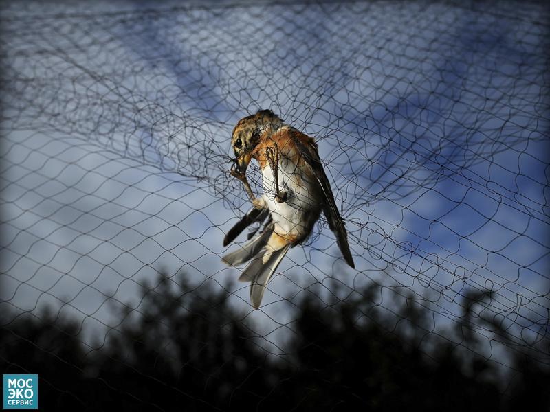 Птица застрявшая в сетке
